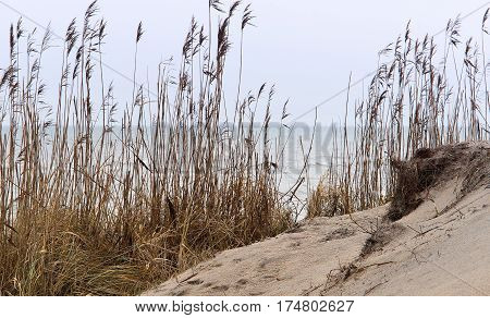 sand dune sandy cliff coast dry grass on the sand