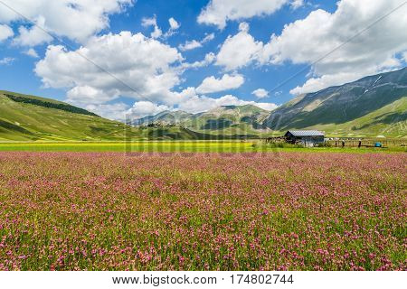 Beautiful Summer Landscape At Piano Grande (great Plain) Mountain Plateau In The Apennine Mountains,