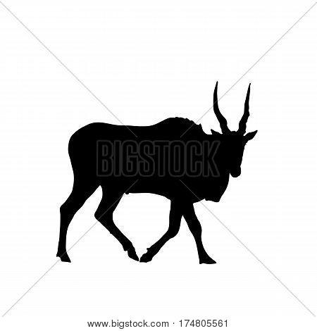Eland Antelope - Silhouette - digitally hand drawn Vector Illustration