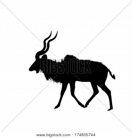 Kudu on the walk - Silhouette - digitally hand drawn Vector Illustration