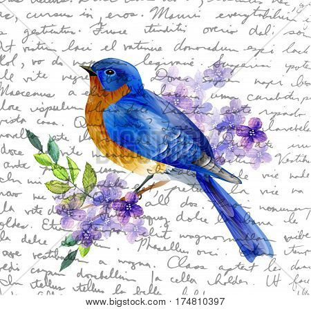 Bird of Spring eastern bluebird vector isolated on handwritten background with spring flowers