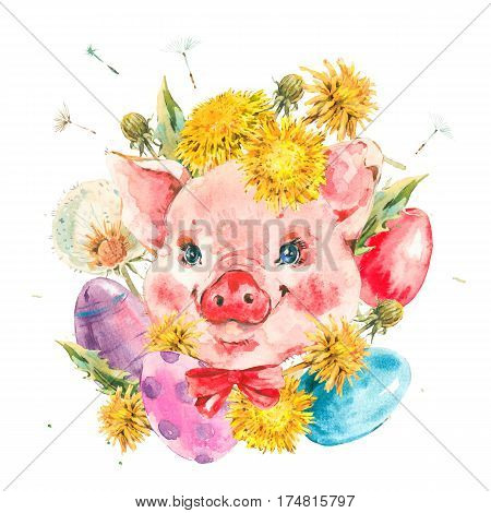 Cute piggy with spring flowers, yellow and white dandelions, colored eggs. Animal pig watercolor illustration. Easter spring hand painted art work isolated on white background