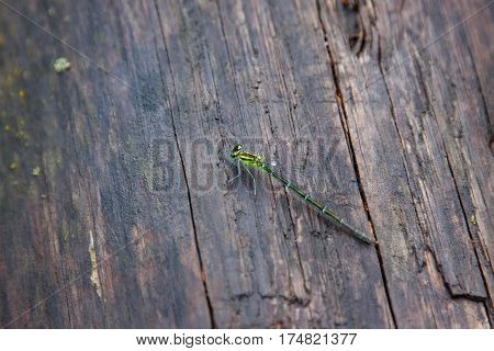 dragonfly rest on an old wooden surface