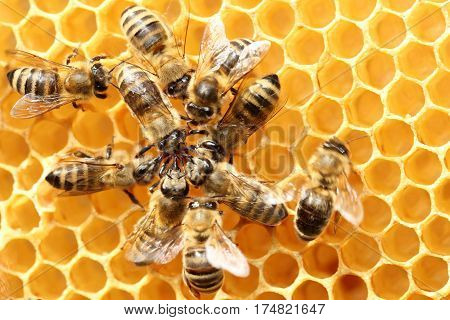 some dancing bees in circle on a beeswax
