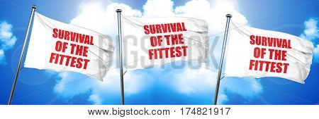 survival of the fittest, 3D rendering, triple flags