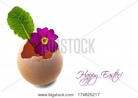 Happy Easter card with primrose flower in eggshell