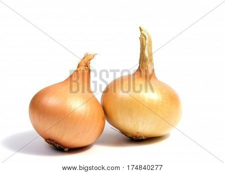 Young fresh onion isolated on a white background.