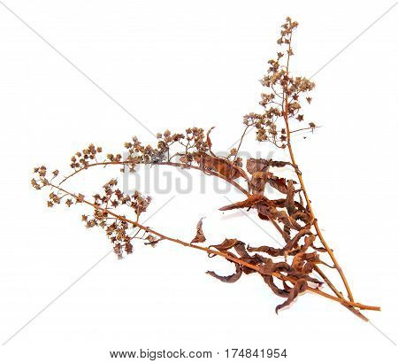 Abstract Brown Twig Of Dried Bush With Small Open Bolls Seeds