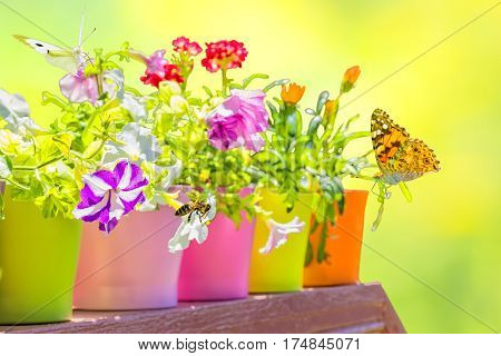 Bright summer flowers in colorful flowerpots backlit on a blurred yellow-green background on a sunny day