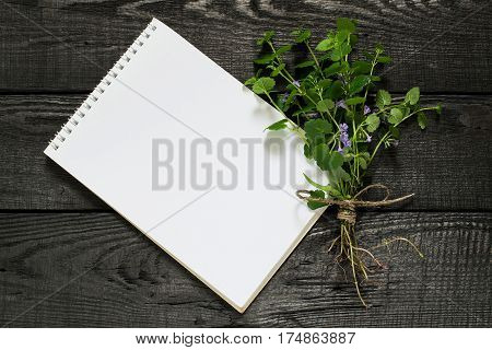 Medicinal plant Glechoma hederacea and notebook to write recipes and methods of application. Used in herbal medicine nutrition horticulture