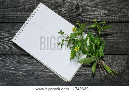 Medicinal plant Geum urbanum (also known as wood avens herb Bennet colewort and St. Benedict's herb) and notebook to write recipes and methods of application. Used in herbal medicine and cooking