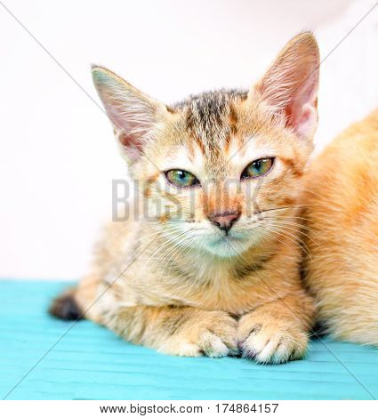 Young kitten on wooden bench. Little cat on wooden background. Countryside life of domestic cat. Sleepy kitten on rustic board. Lovely brown kitty. Domestic pet living outdoor. Lovely animal on white