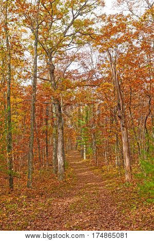 Fall Color on a Forest Path in Black River State Forest in Wisconsin