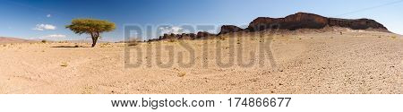 Panorama of a lonely tree and some mountains in the Sahra desert, Hammada, Morocco.