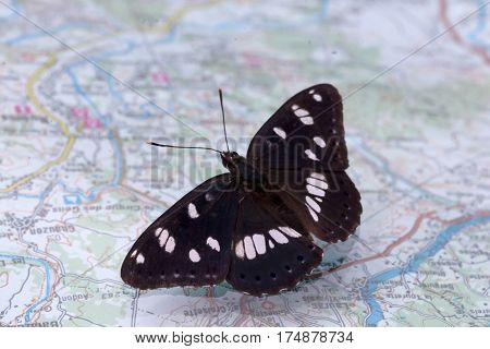 White Admiral Sitting On A Tourist Map