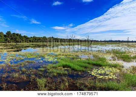 blue sky reflected in a forest lake