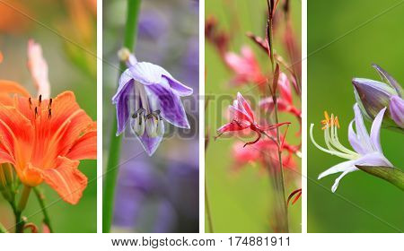 Close up shot of different flower collage