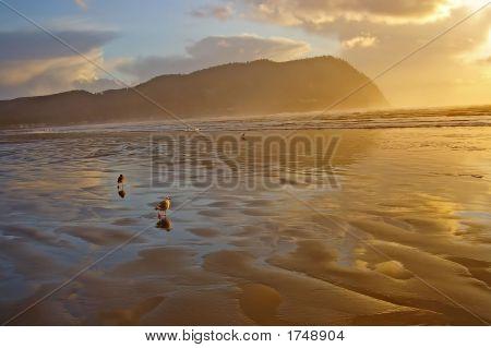 seagulls at seaside after storm seaside oregon poster
