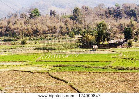 Green rice field in Pua Nan province North Thailand