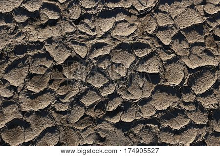Mud-cracked clayey soil dried and curling in irregular polygonal patterns.