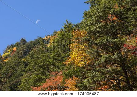 Autumn forest in front of moon under blue sky