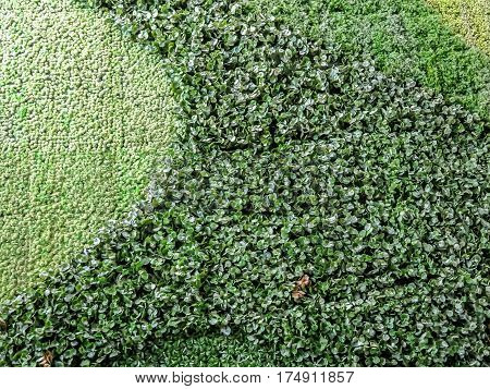 Texture of beautiful green grass on the wall
