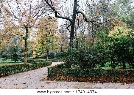 Retiro Park in Madrid with fallen leaves in autumn