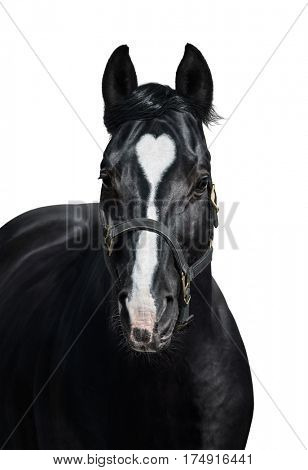 Black horse with heart mark. Unigue and rare colored. Isolated on white.