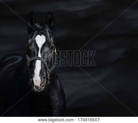 Portrait of black horse with heart mark on dark background. Unigue and rare colored.
