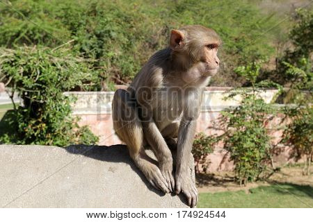 Jaipur - the ancient city of palaces and treacherous monkeys, India