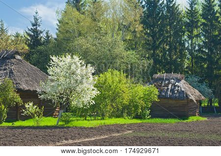 Spring come to an old Ukranian farm in outdoor museum.