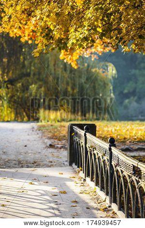 Autumn in park Aleksandriya. nature. fall. foliage.
