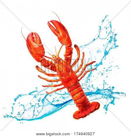 Red lobster with water splashes isolated on white background