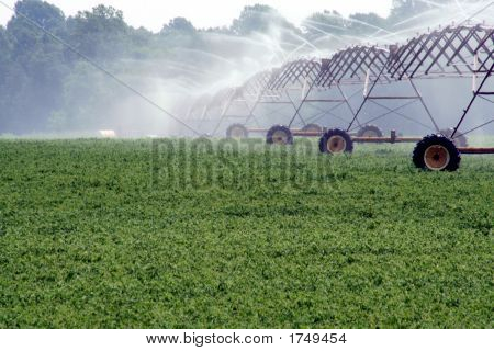 Soy Beans & Irrigation System