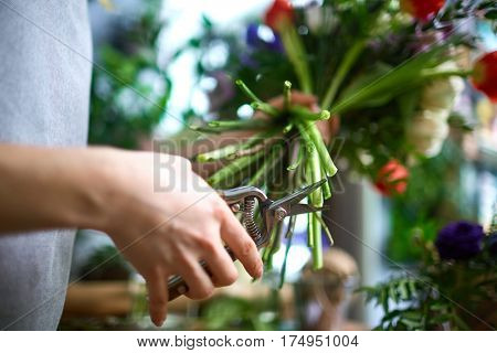 Human hand with scissors cutting floral stems