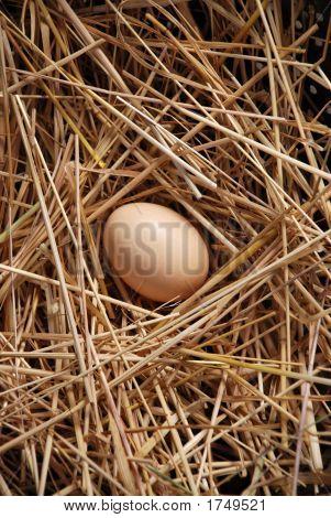 Brown Egg 34