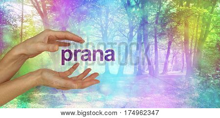 Beautiful Prana Healing Energy  - female hands with the word PRANA floating between in front of an ethereal rainbow colored bokeh effect magical woodland scene  and copy space