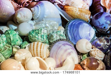 close up colorful shell skin from ocean in survinion store shop for tourism