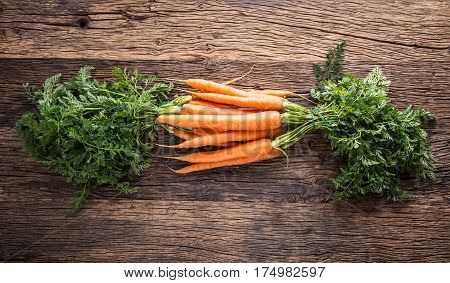 Carrot. Fresh Carrots bunch. Baby carrots. Raw fresh organic orange carrots. Healthy vegan vegetable food.