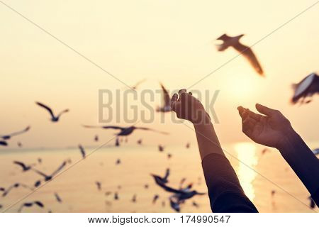 Humand Hands Showing and Seagulls Outdoors
