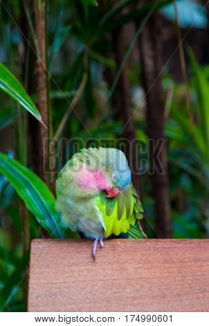 A Colorful Parrot Preening on a Wall