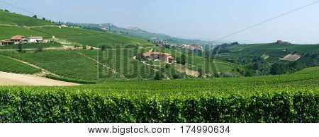 The vineyards at the village of Barolo in Piedmont Italy