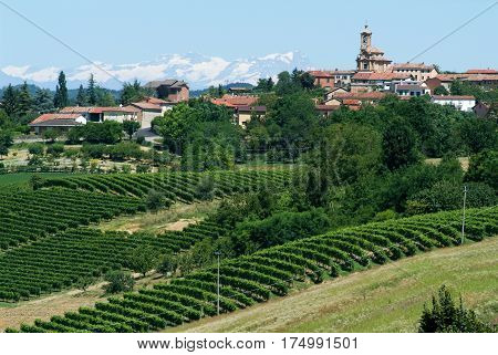 Vineyards Of Monterrato On Piedmont