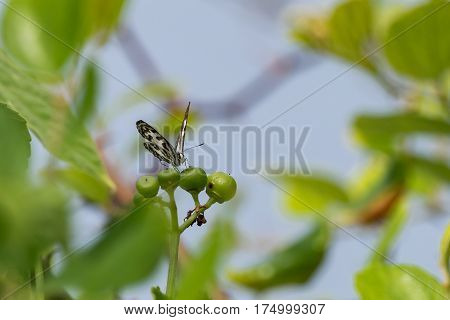A butterfly sitting on a some foliage at Uluwatu in the south of the Indonesian island, Bali. Bali is a popular tourist destination.