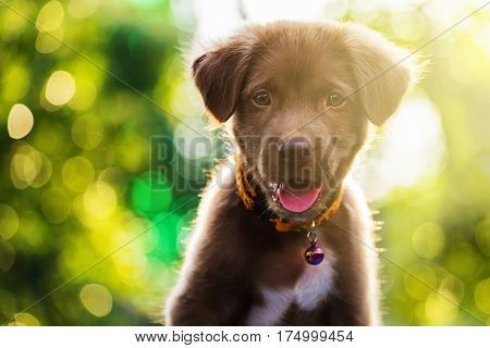 Labrador Puppy Dog With Bokeh Light