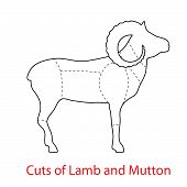 Cuts of Lamb and Mutton. Pattern diagram poster