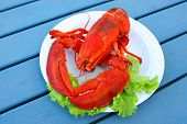 Cooked Atlantic lobster served on a plate with greens. poster