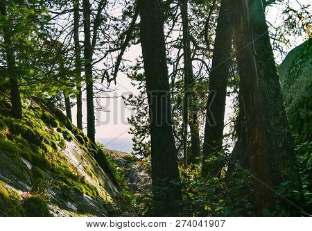 View Of The Ocean Through The Trees In Lighthouse Park In West Vancouver On North Shore Of Vancouver