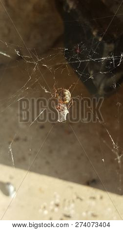 Spider On A Web Suspended In Midair Eating Its Prey