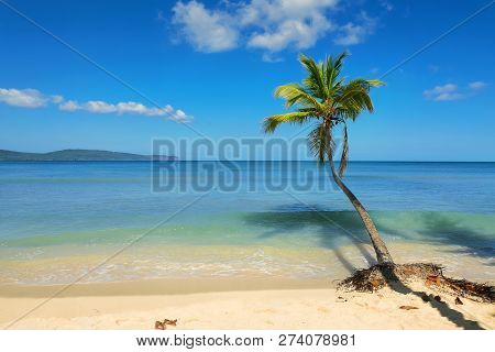 Travel Vacation Tropical Destination. Palm Tree Beach Landscape. Travel Vacations Destination. Trave